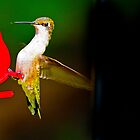 Man and Nature - The Hummingbird by TJ Baccari Photography