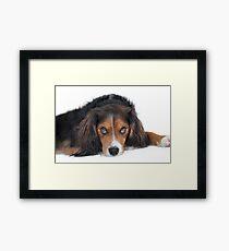Soulful Black Tan White pup Framed Print