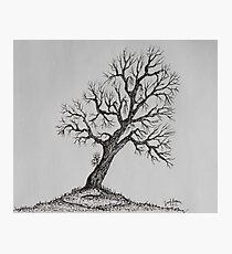 Hilltop Tree Photographic Print