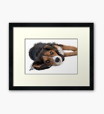 Cute Black Tan White Pup Framed Print