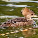 Like Water Off A Ducks Back by Kathy Baccari