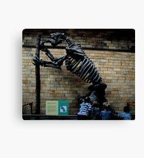 Natural History Museum - Megatherium Canvas Print