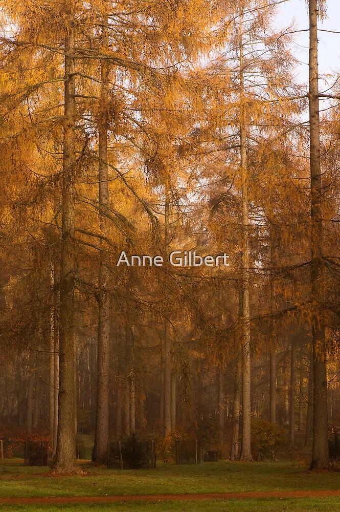 Autumn Larch by Anne Gilbert