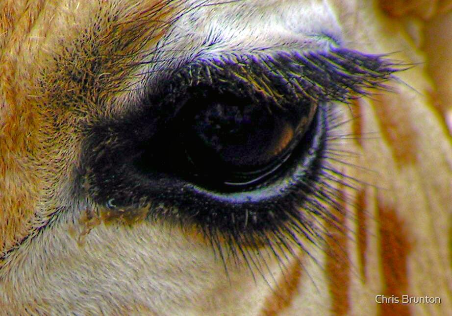 Giraffe eye by Chris Brunton