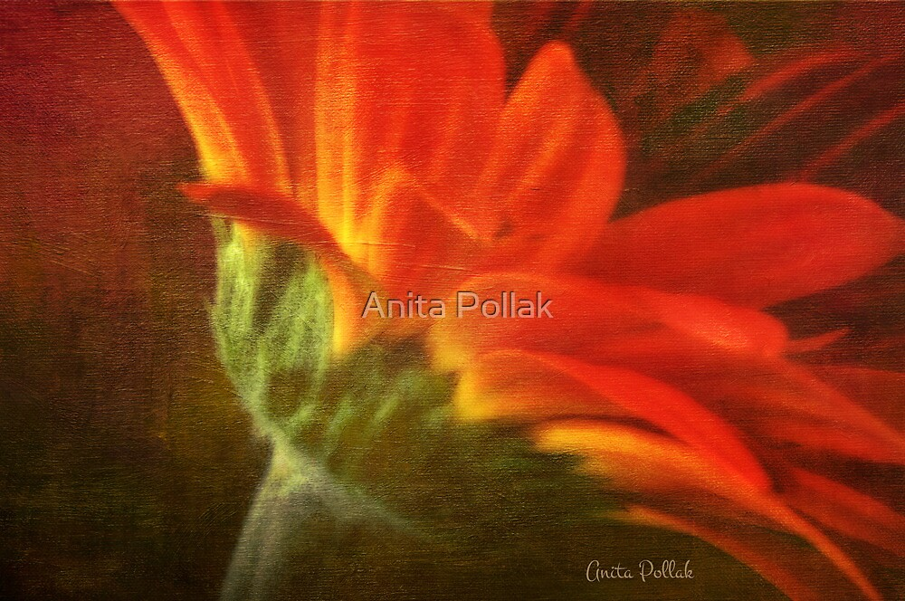 Painted Daisy by Anita Pollak