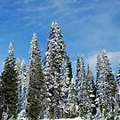 Snow Covered Pines by North22Gallery