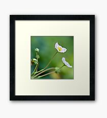 Strawberry Flowers Framed Print