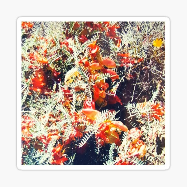 Delightful glory of wild Karoo bush Sticker