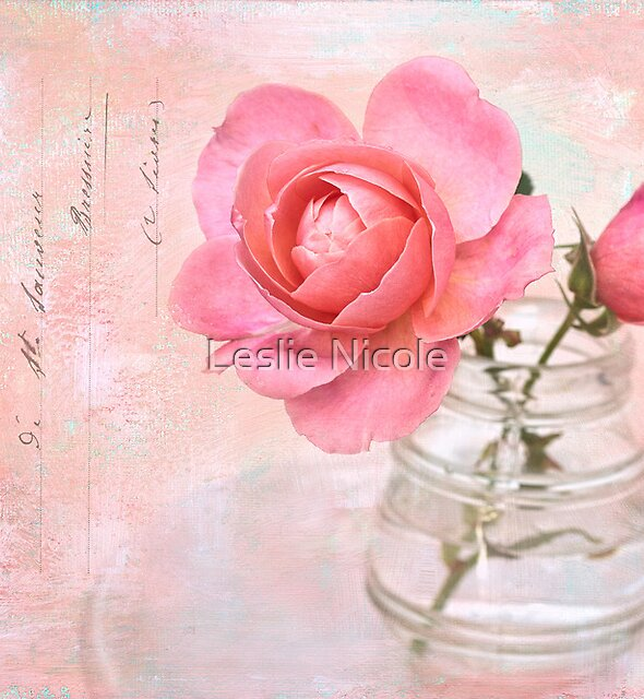Rose Palette by Leslie Nicole