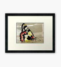 Bright Wings Framed Print