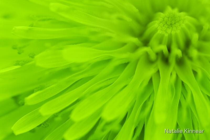 """Lime Green Wall Art bright lime green wall art"""" framed printsnatalie kinnear"""