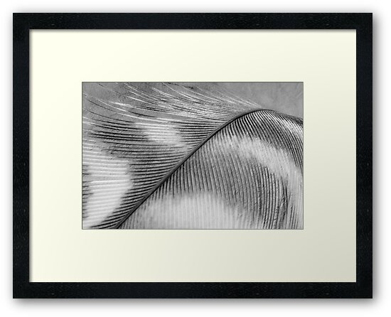 Feather in Black and White Wall Art by Natalie Kinnear
