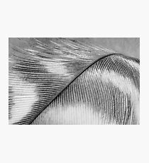 Feather in Black and White Wall Art Photographic Print