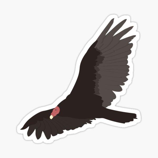 Turkey Vulture - Cathartes Aura Sticker