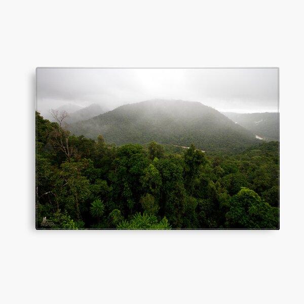 Mamu Rainforest Walk 1 Canvas Print