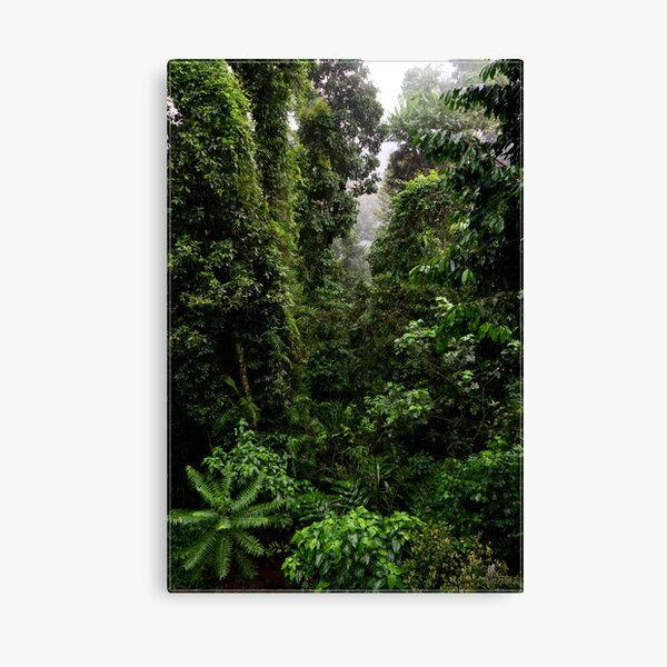 Mamu Rainforest Walk 2 Canvas Print