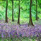 Bluebell Woods - Walking Annie by Catherine Price