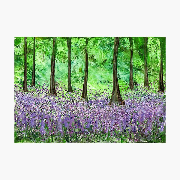 Bluebell Woods - Walking Annie Photographic Print