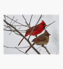 Male and Female Cardinal  Photographic Print