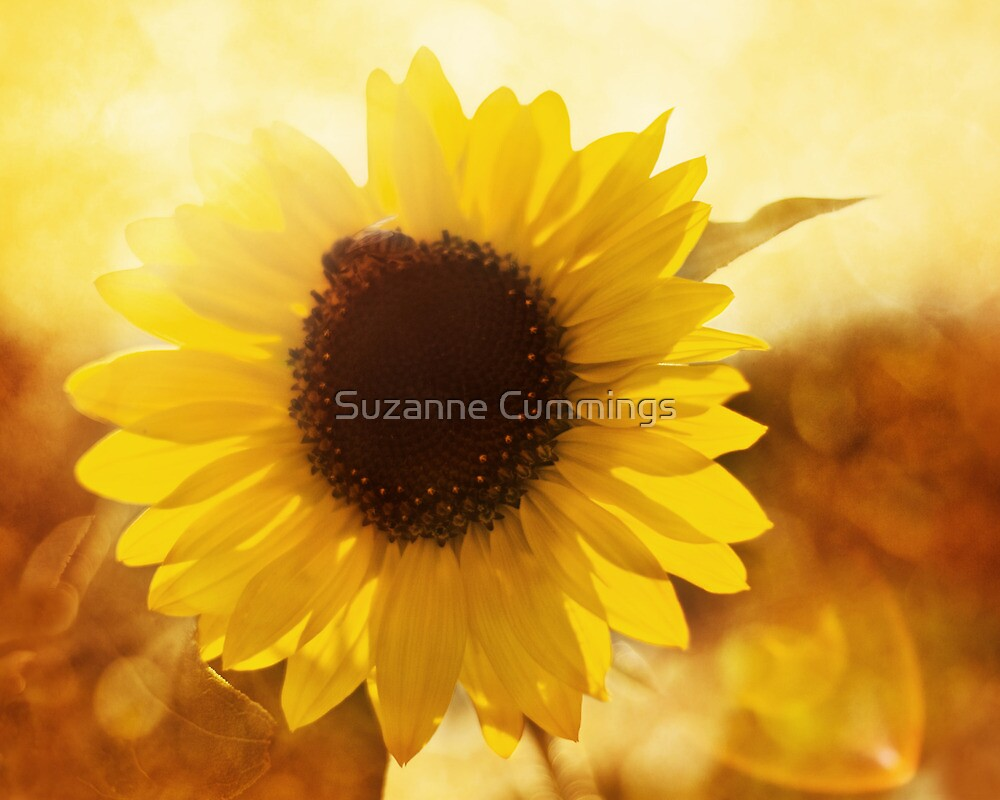Good Day Sunshine by Suzanne Cummings