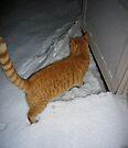 """Let Me In"" by FrankieCat"