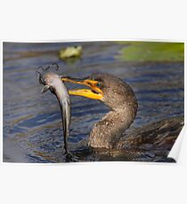 Double-crested Cormorant Fishing Poster