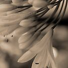 Sepia Flowers for my iPhone by Jeannie26