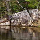 Somerset Dam - Rock & Tree by Chris Cohen