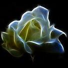 Cream Rose by Lynn Bolt
