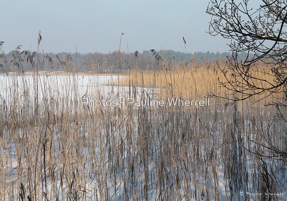 The frozen pond II by Photos - Pauline Wherrell