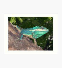 Blue Agama, Amarapura Art Print