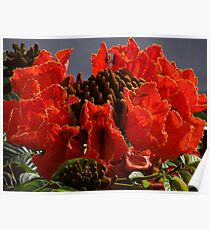 Tropical Beauty - Belleza Tropical Poster