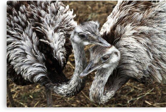 Love Birds by Karol Livote