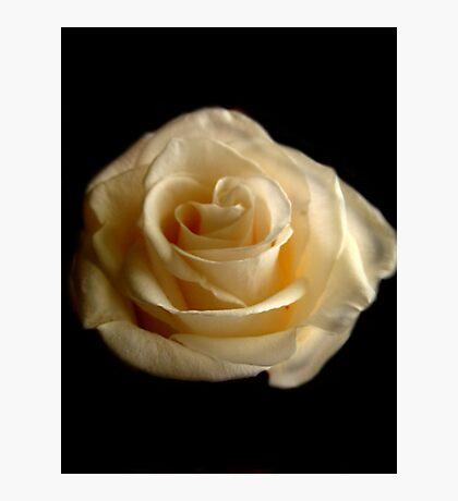 rose on black background Fotodruck