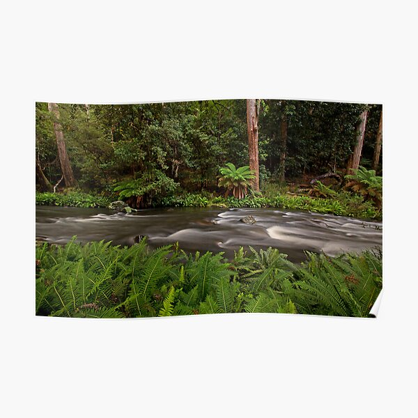 Manning River, Barrinton Tops Poster