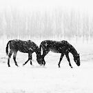 Horses in the Snow by meredithnz