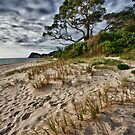 Whiritoa Sands by meredithnz