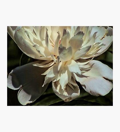 Petals of pale pink Fotodruck