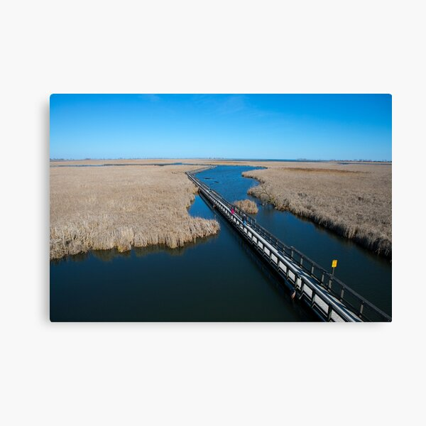 Point Pelee Boardwalk Canvas Print