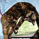 The Yoga Cat by Jane Neill-Hancock