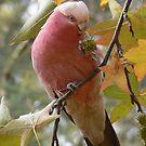 Pink Poser by Derek Kan