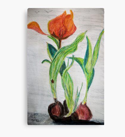 Tulips and Bulbs Canvas Print