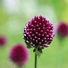 Red flower by Goca