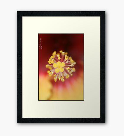 Pollenate! Framed Print