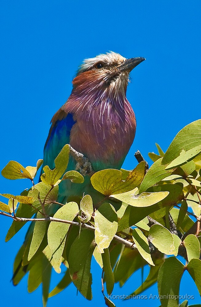 Colourful and proud by Konstantinos Arvanitopoulos