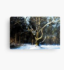 Saying Goodbye to winter Metal Print