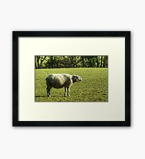 Another Sheep Framed Print