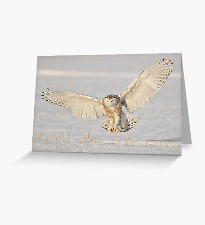 The Flasher Greeting Card