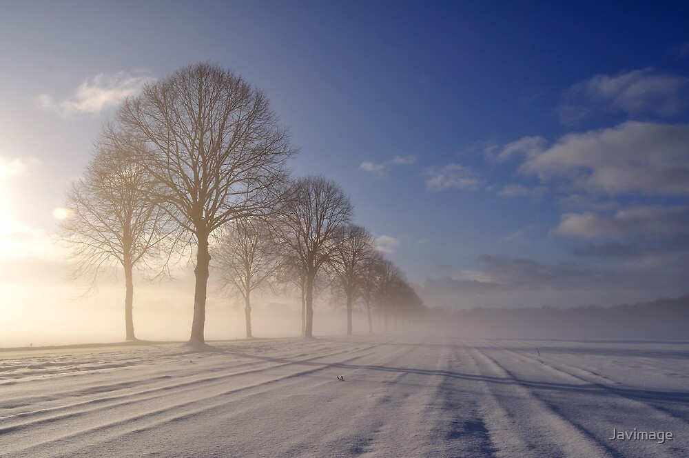 Winter morning tree line by Javimage