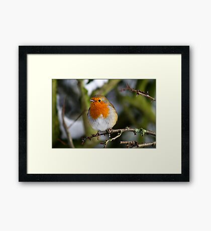 Cheeky Robin Framed Print